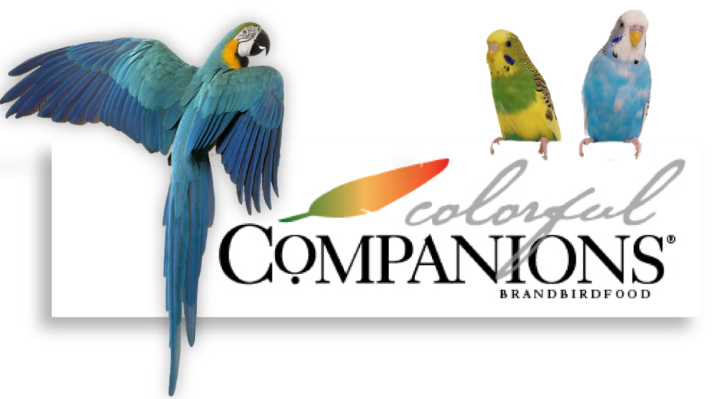 colorful companions header-01.png
