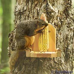 audubon corn squirrel feeder.jpg