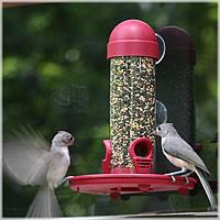 window feeder.jpg