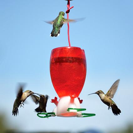 audubon hb feeder.jpg