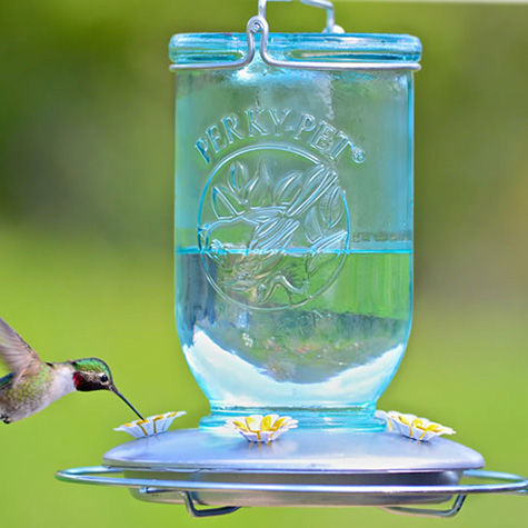 perky pet mason jar feeder.jpg