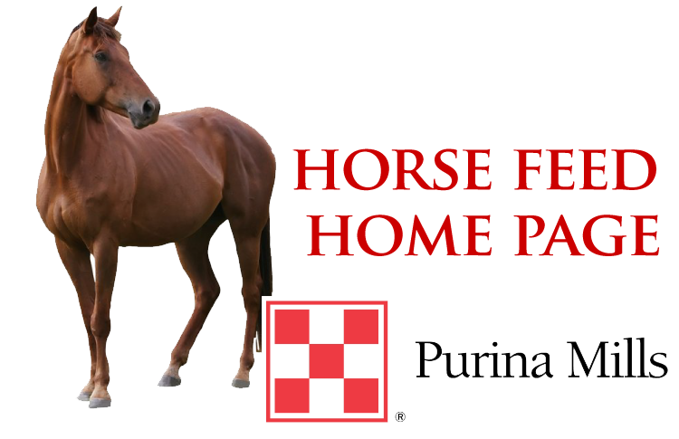 horse home-01 copy.png