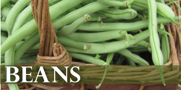beans link-01.png