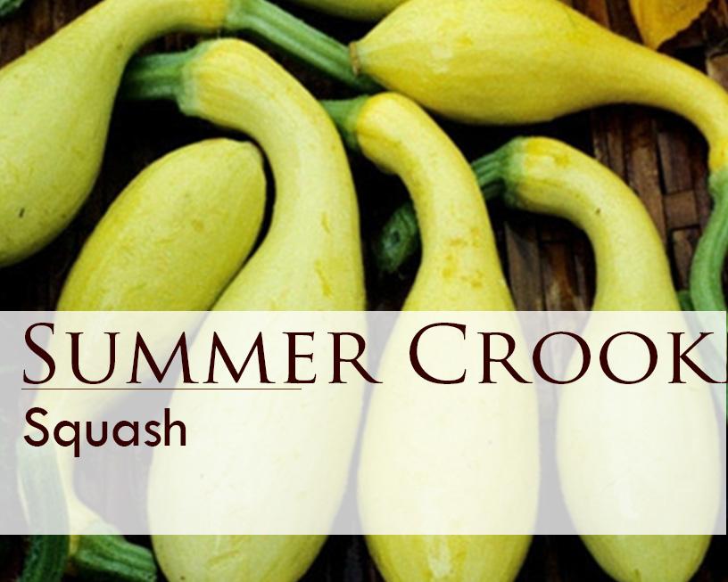Seed web img_Squash_Summer Crookneck_1 oz.jpg