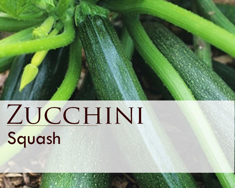 Seed web img_Squash_Zucchini_1 oz.jpg