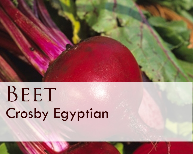 Seed web img_Crosby Egyptian Beet.jpg