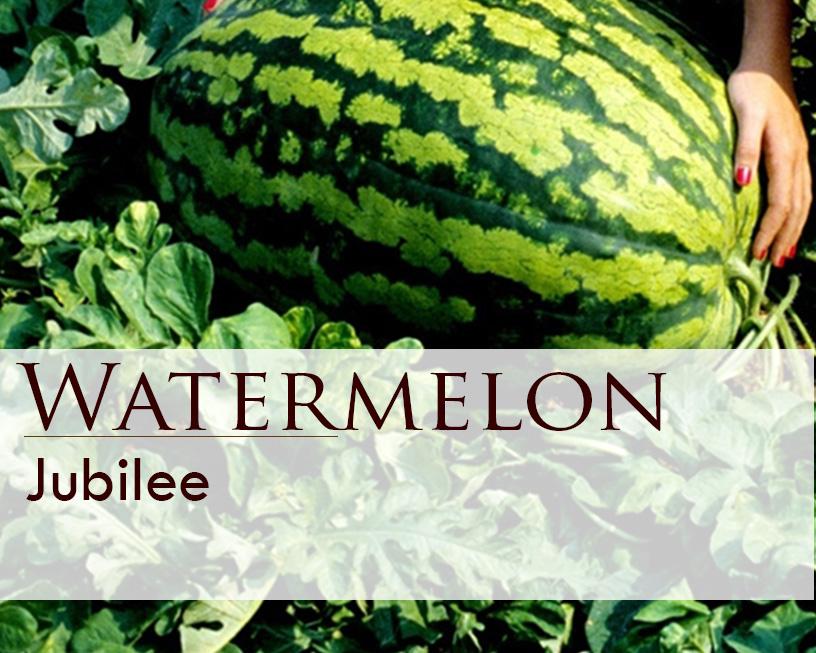 Seed web img_Jubilee Watermelon.jpg