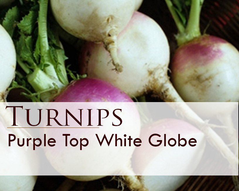 Seed web img_Purple Top White Globe Turnips.jpg