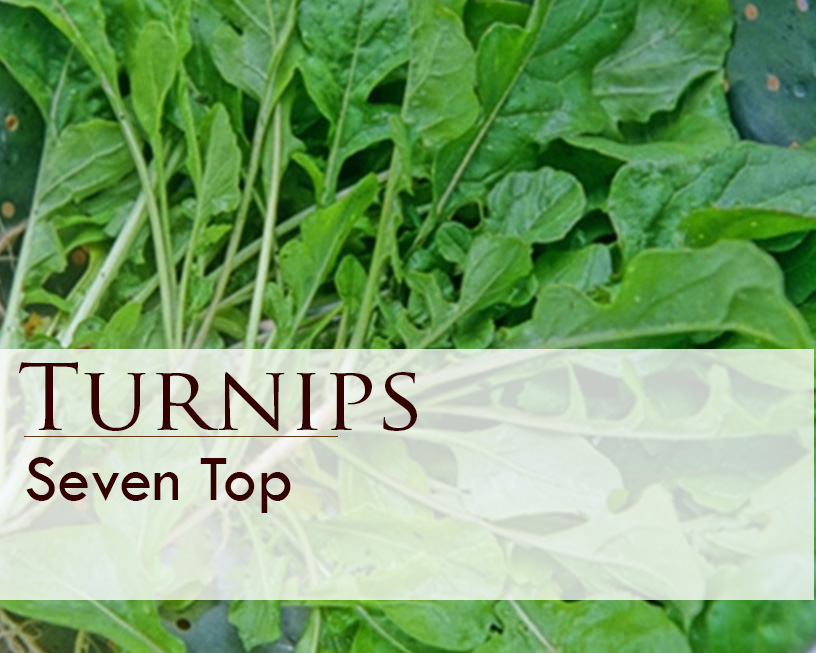 Seed web img_Seven Top Turnips.jpg
