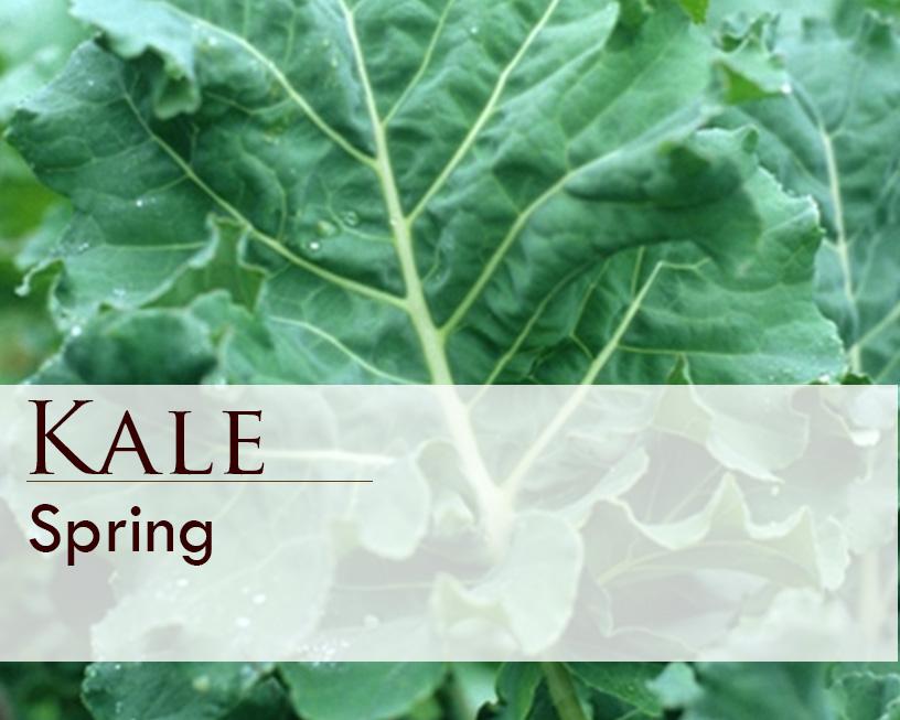 Seed web img_Spring Kale.jpg