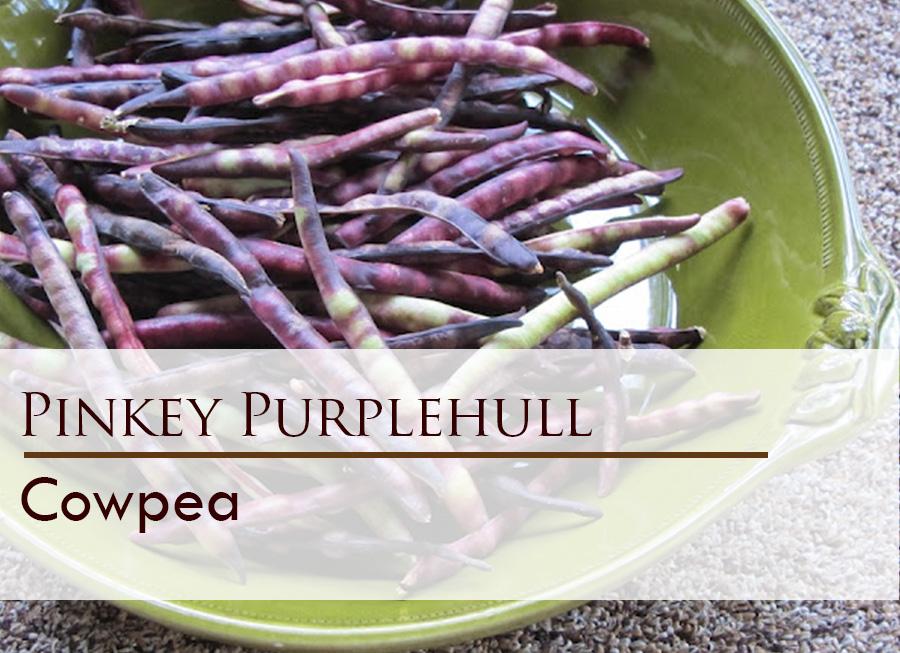 Seed web img_Pinkey Purplehull.jpg