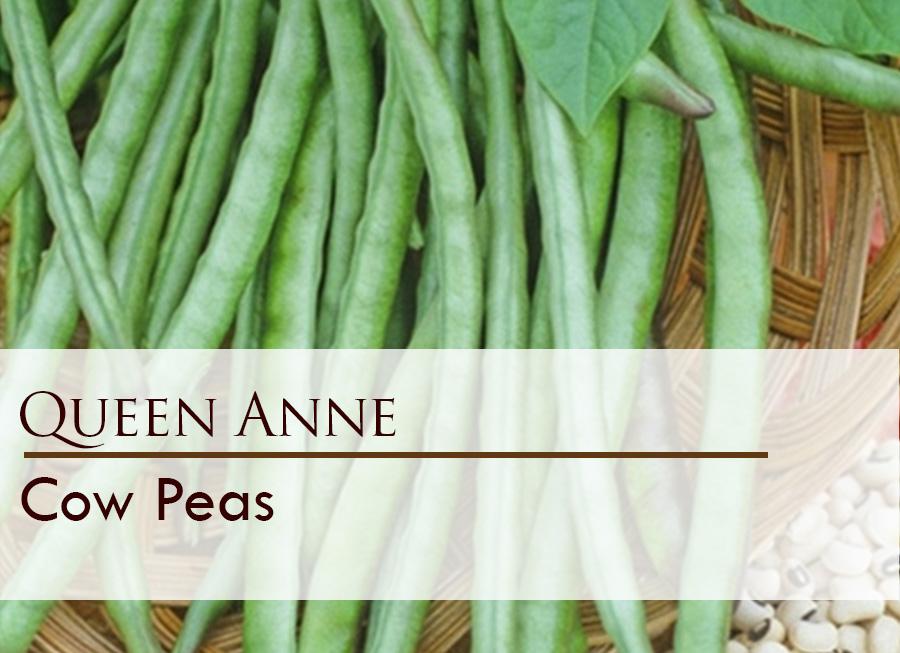 Seed web img_Queen Anne.jpg