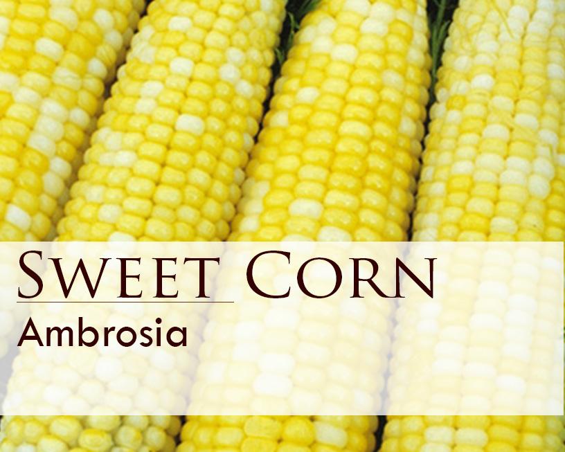 Seed web img_Sweet Corn_Ambrosia.jpg