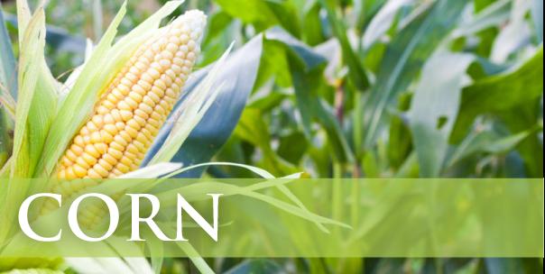 corn link-01.png