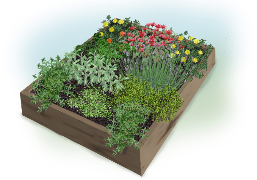 Sample 4′ x 4′ Planting Plan