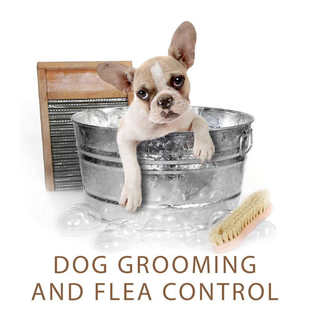 dog grooming LNK-01.jpg