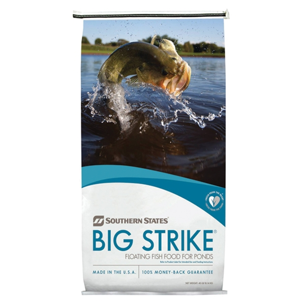 Big Strike Fish.jpg