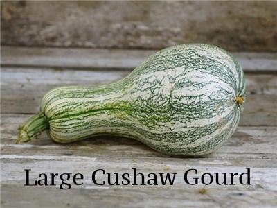 Large cushaw.jpg