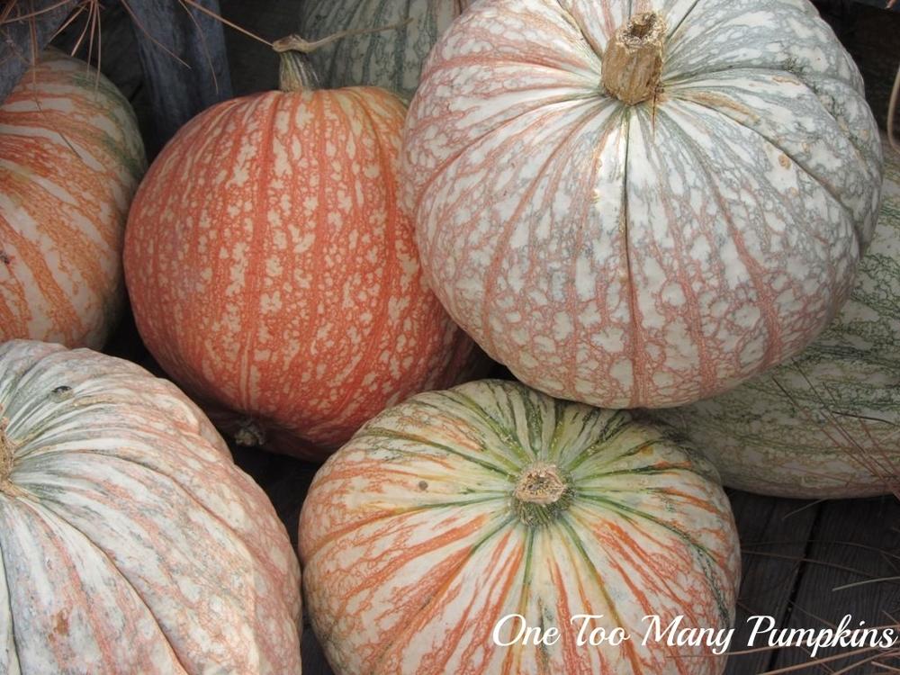 One-too-many-pumpkin.jpg