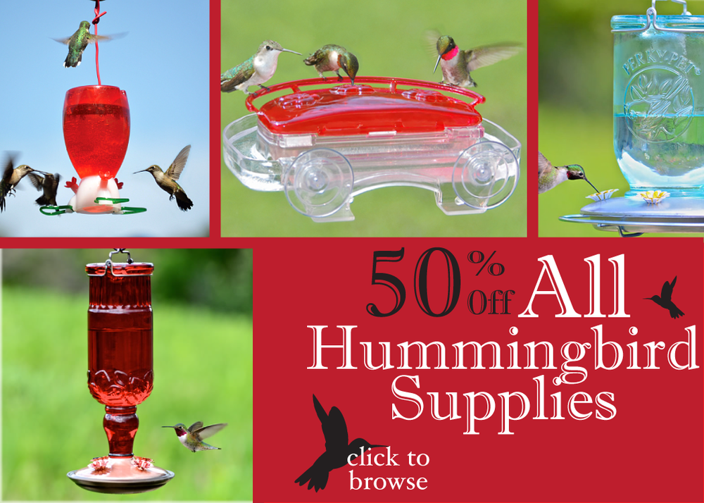 hummingbird SALe-01.png