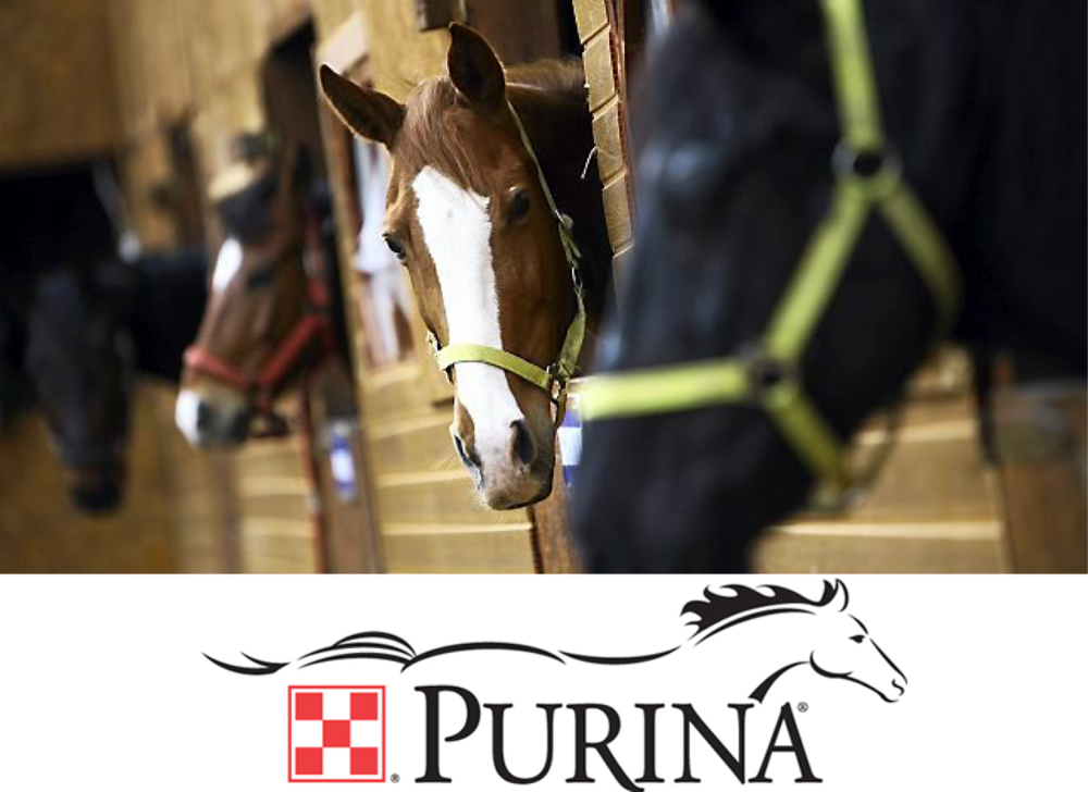 Purina-Proud-Social-Media-Image-Authentic-Hope-300x225.jpg