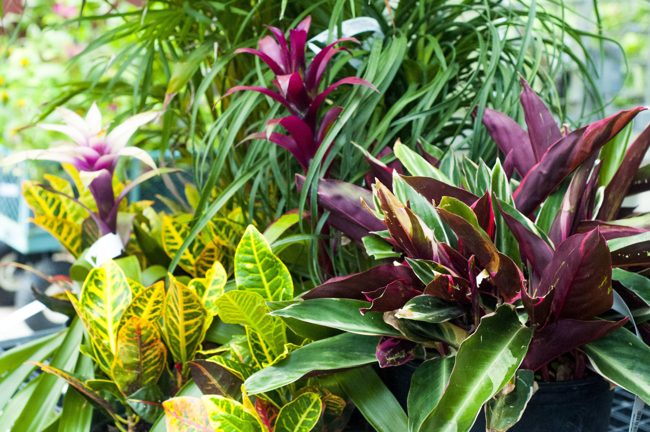 house plants & tropical — jamestown feed and seed