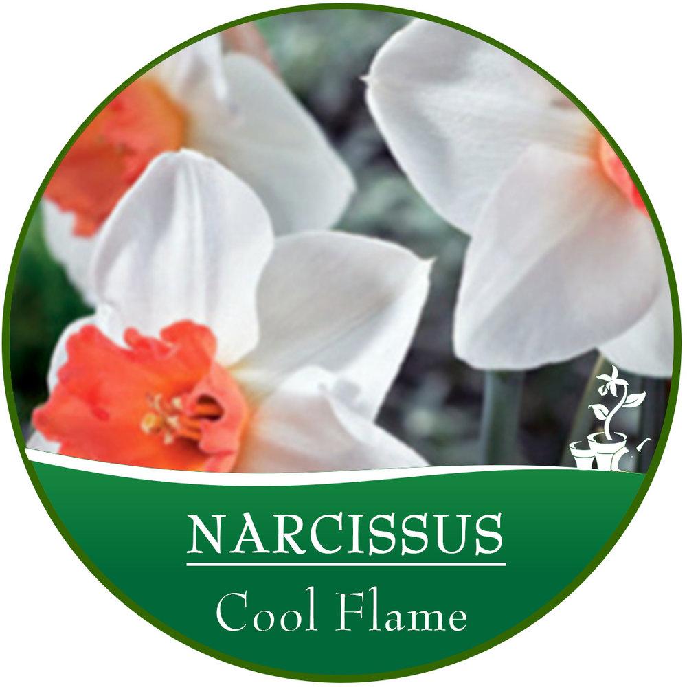 Cool Flame.jpg
