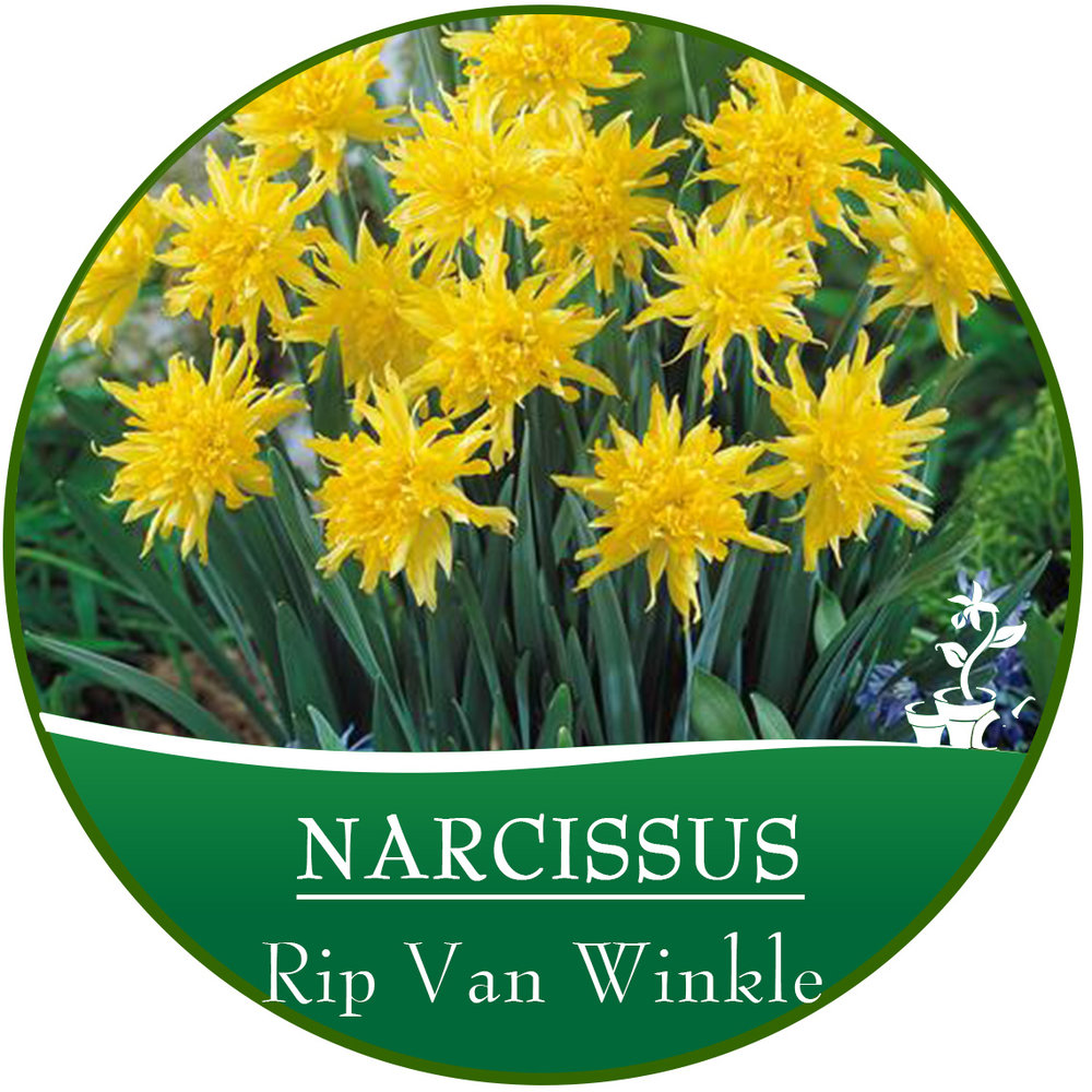 Rip Van Winkle.jpg
