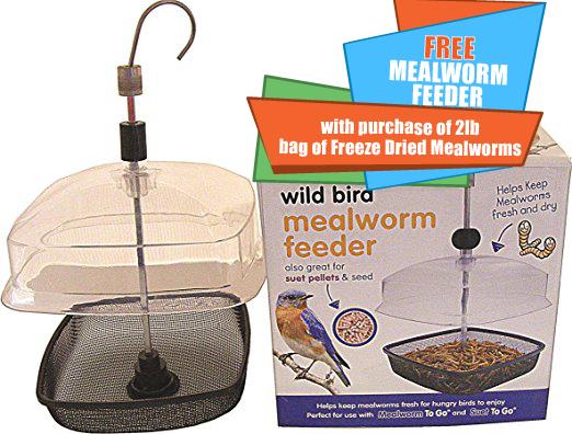 mealworm feeder-01.jpg