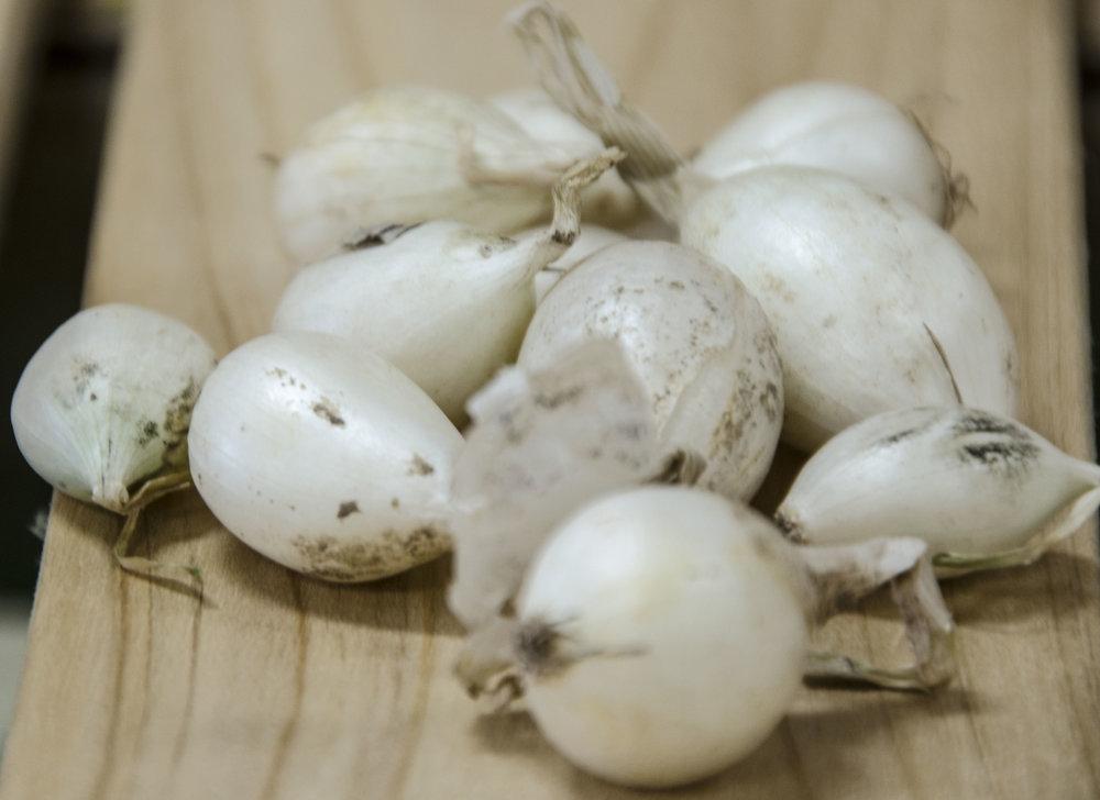 white onions.jpg
