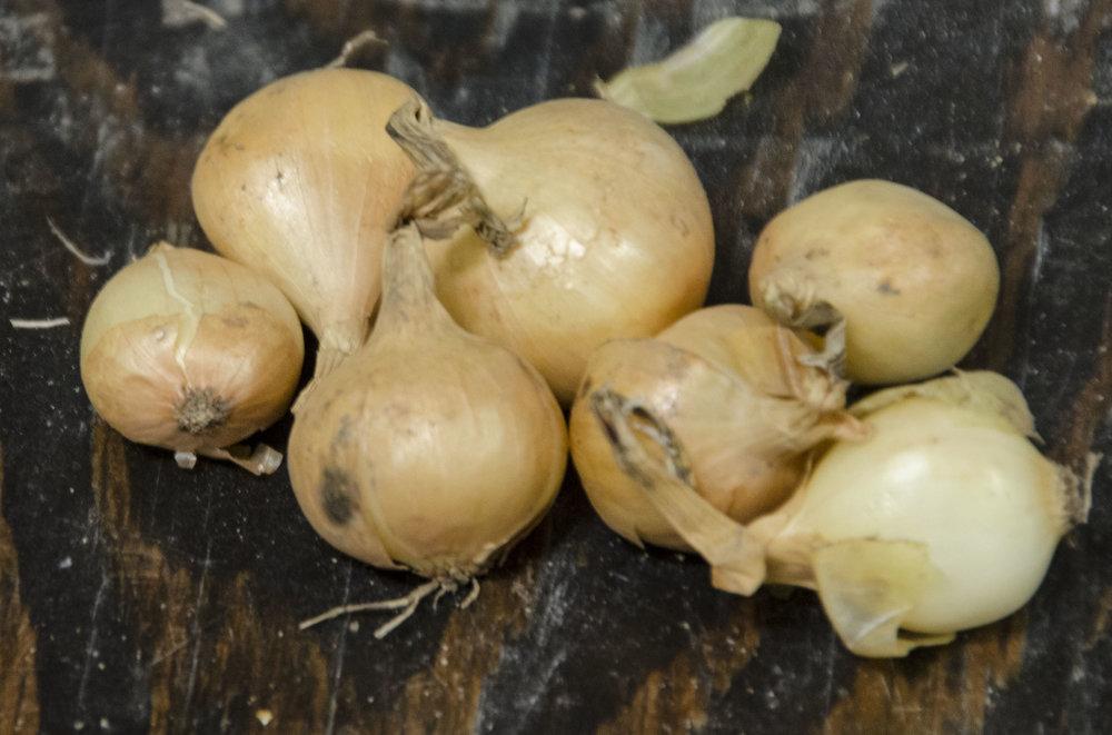yellow onions.jpg