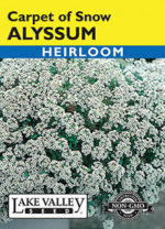 004-Alyssum-Carpet-of-Snow-web-thumb-150x208.jpg