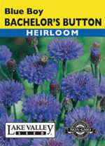026-Bachelors-Button-Blue-Boy-web-thumb-150x208.jpg
