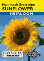 290-Sunflower-Mammoth-Greystripe-web-thumb-150x208.jpg