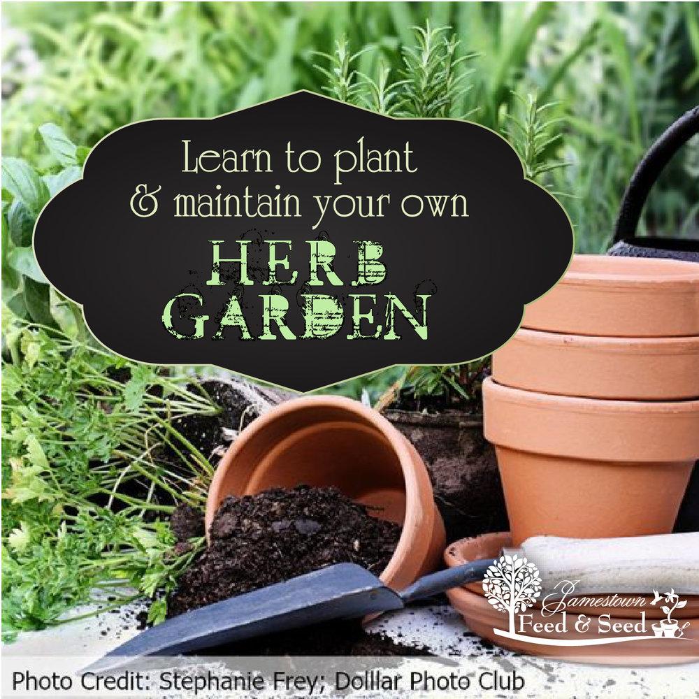 herb garden ad-01.jpg