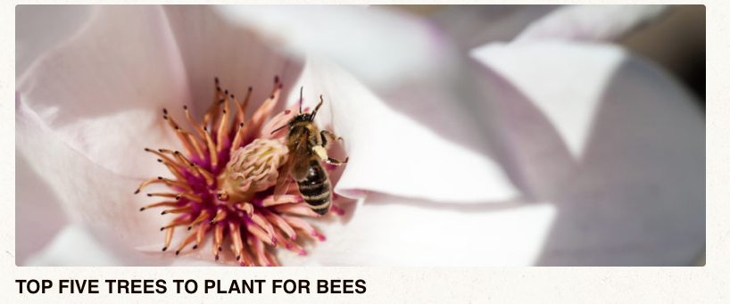 Top five trees to plant for attracting bees