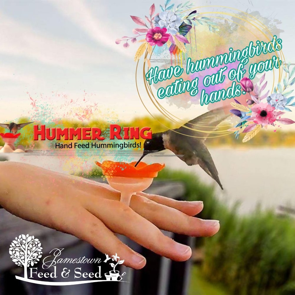 hummer ring ad.jpg