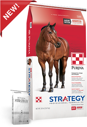 Product_Horse_Purina_Strategy-GX.png