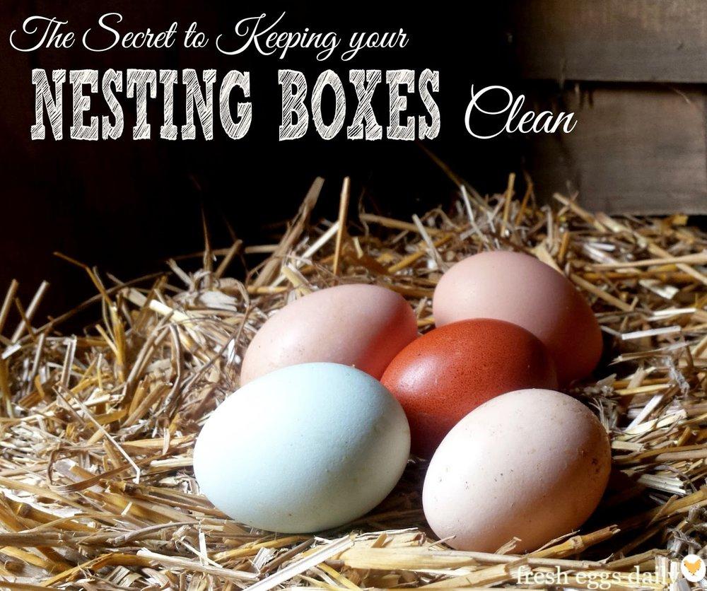 clean-eggs-in-nesting-box.jpg