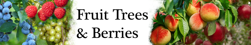 fruit-trees and berries-01.png