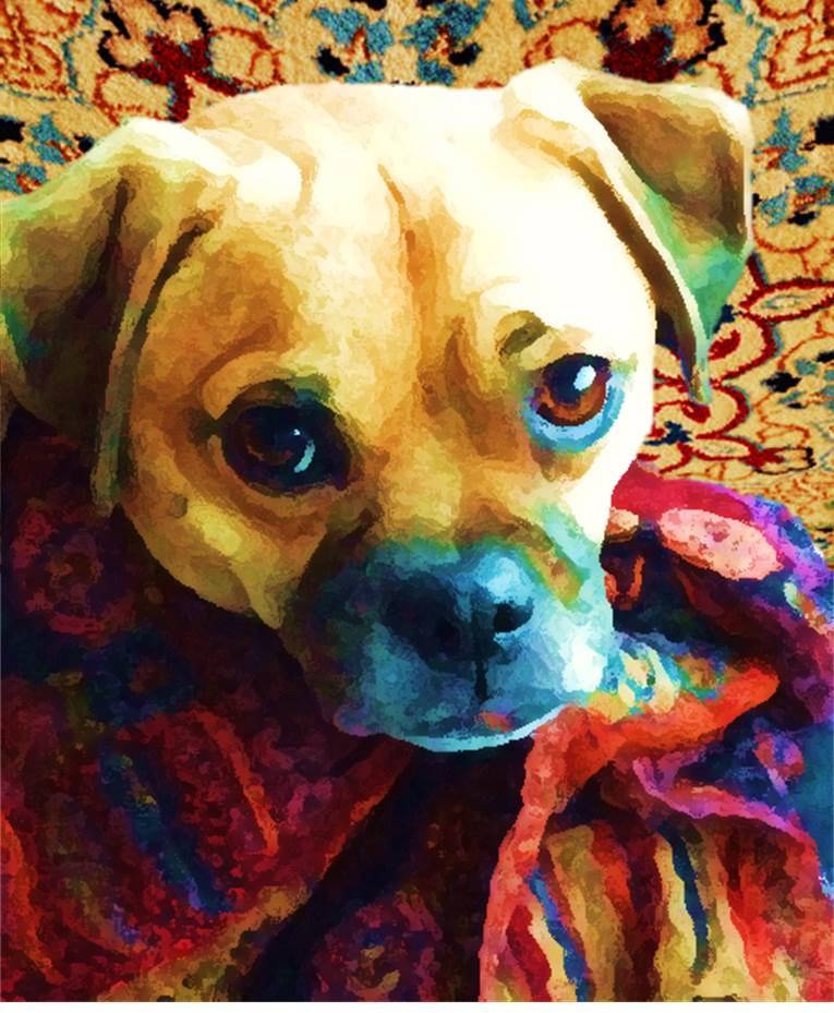 puppy10.2.jpg