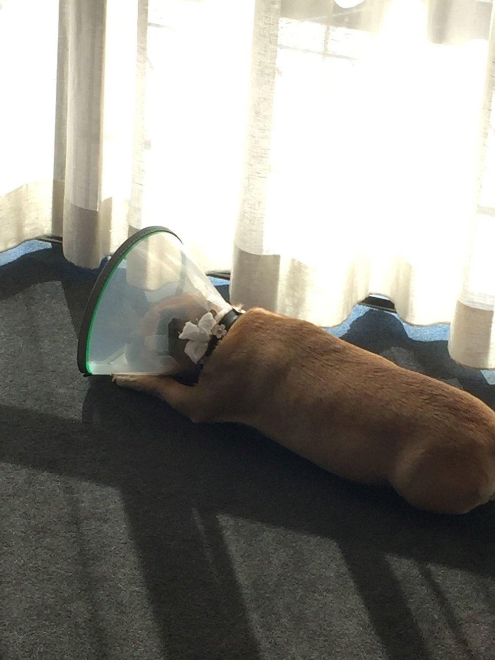 :( - Poor Puppy