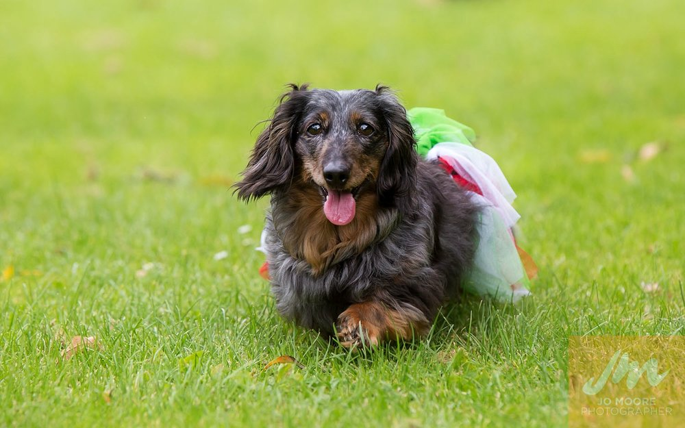 Dachshunds-25.jpg