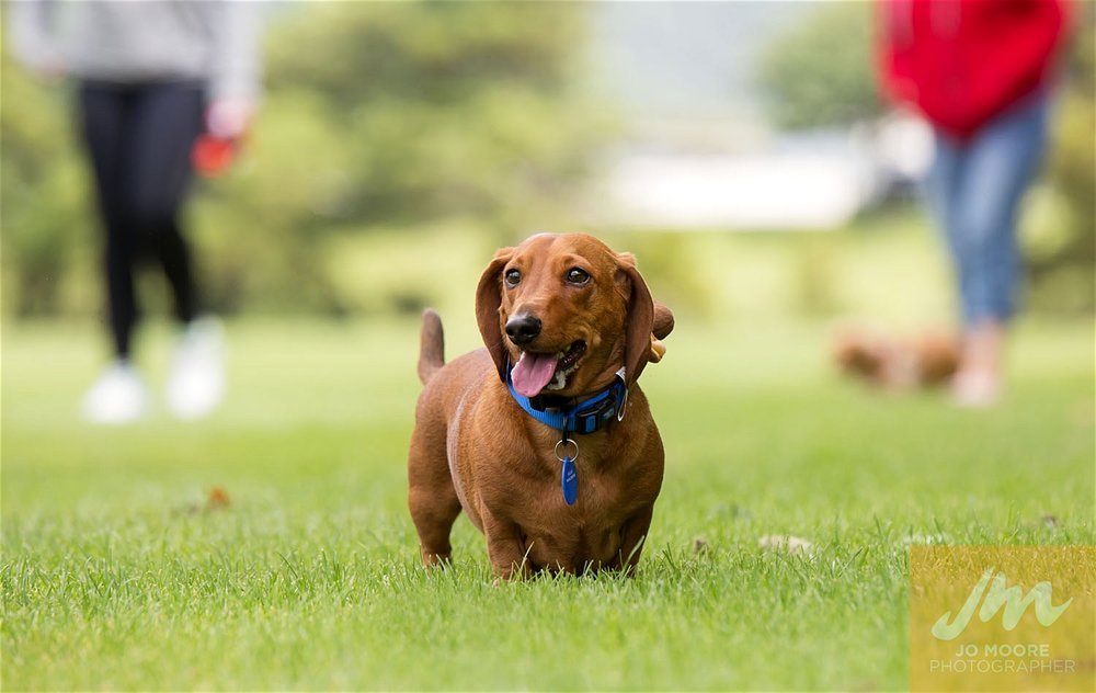 Dachshunds-32.jpg