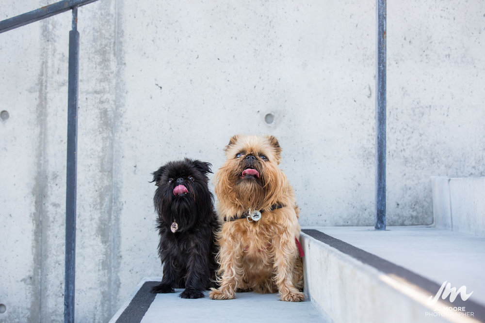 Digby and Alo-20.jpg