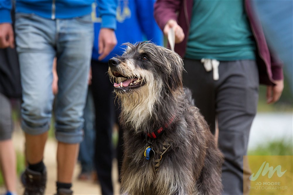 Paws in the Park-70.jpg