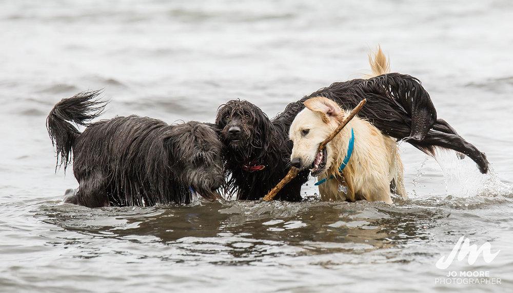 Porirua Dog Lovers-5.jpg