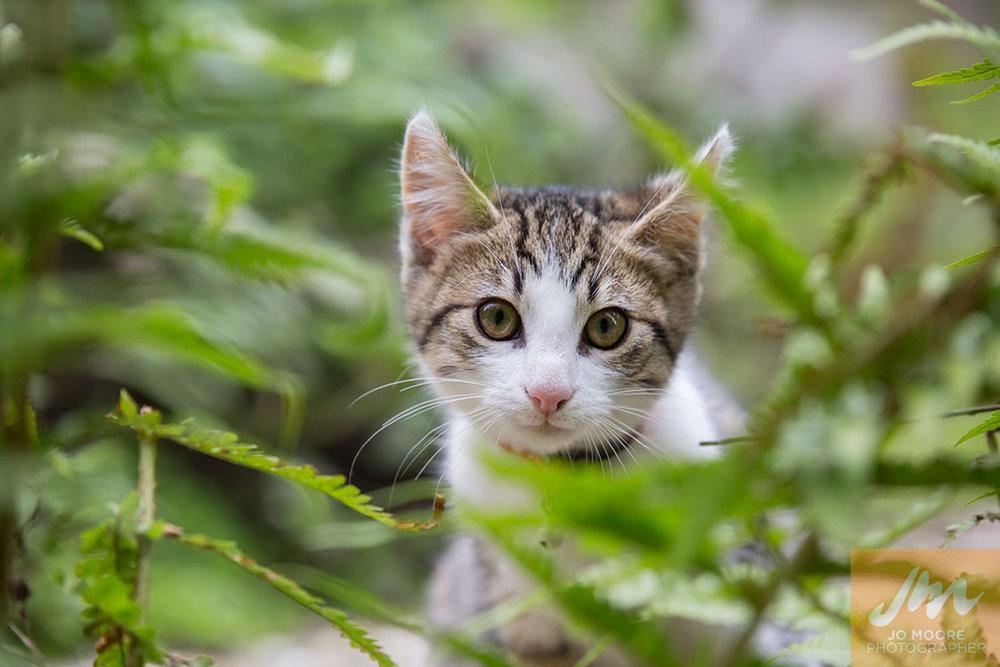 Kelly Cats-10.jpg