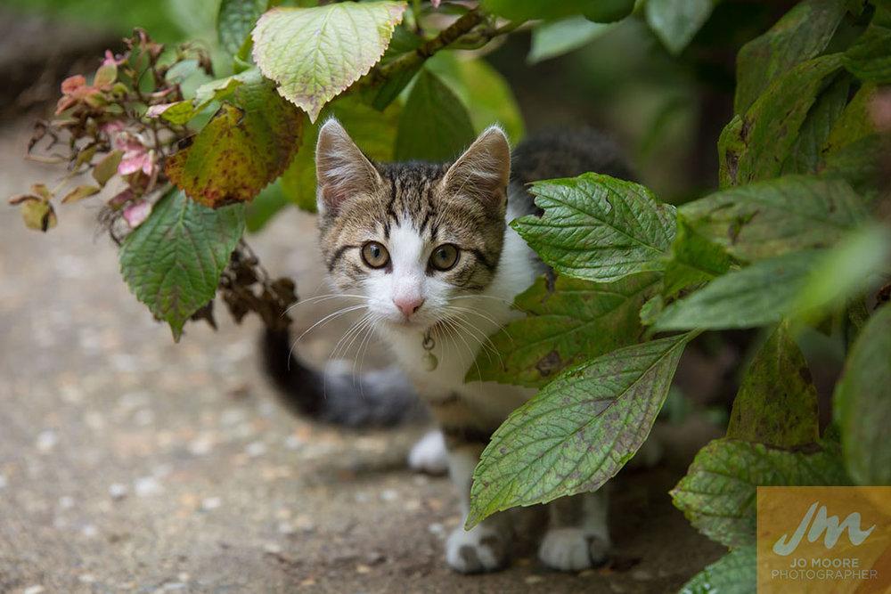Kelly Cats-4.jpg