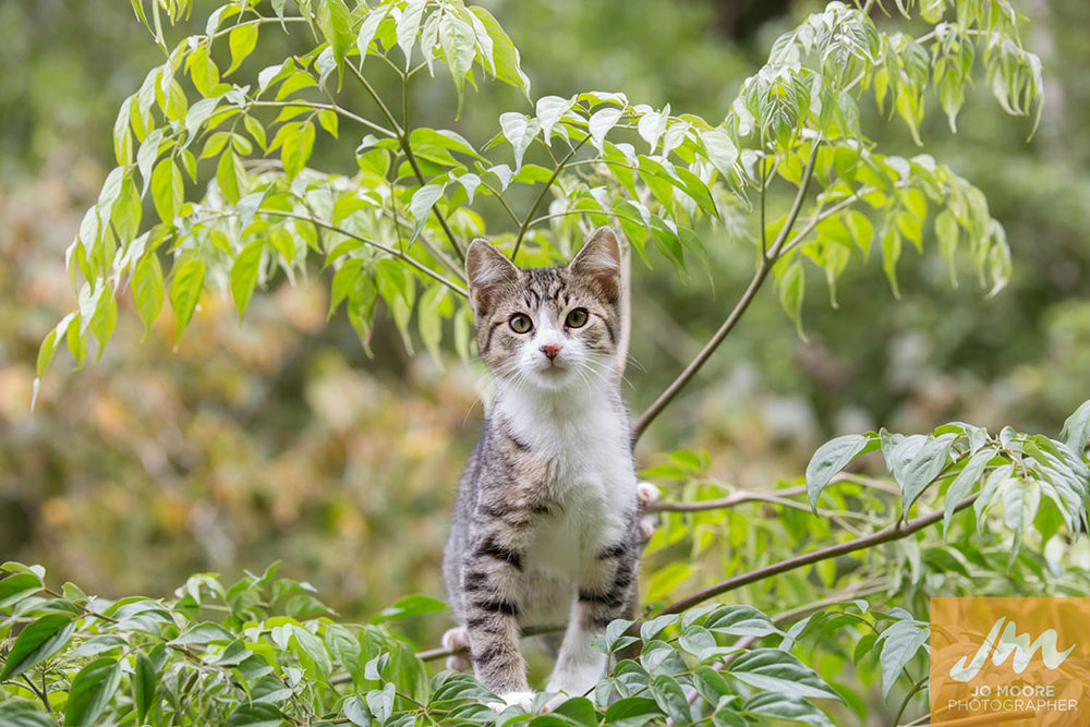 Kelly Cats-16.jpg
